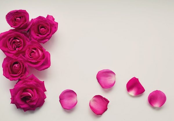 roses-2249400_640
